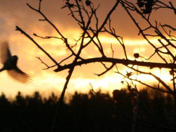 Bild zeigt einen Zweig in Nahaufnahme. Der Himmel dahinter ist in der Dämmerung und das Licht schein golden
